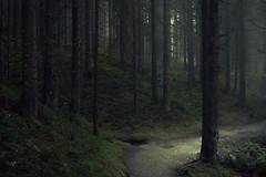 The old Forest and the Light (Netsrak) Tags: forest woods light wald forst licht natur nature mist fog nebel at österreich kleinwalsertal