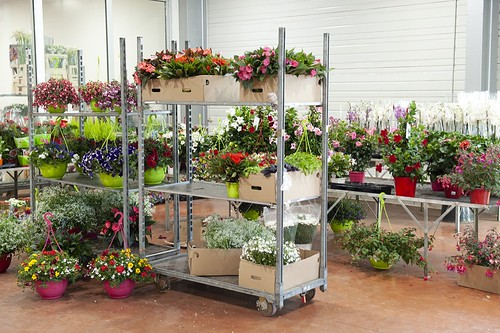 40-FLEURS ET PLANTES -FERRARI FLEURS GROSSISTE AVIGNON