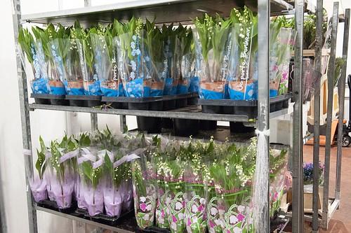 36-FLEURS ET PLANTES - FERRARI FLEURS GROSSISTE AVIGNON