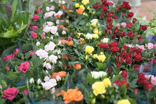 33-FLEURS ET PLANTES - FERRARI FLEURS GROSSISTE AVIGNON