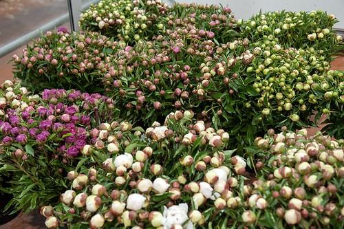 13-FLEURS ET PLANTES - FERRARI FLEURS GROSSISTE AVIGNON