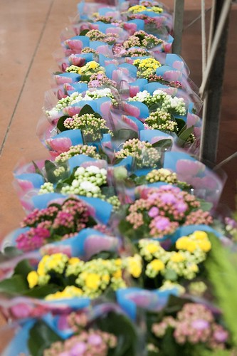 8-FLEURS ET PLANTES - FERRARI FLEURS GROSSISTE AVIGNON