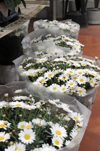 34-FLEURS ET PLANTES - FERRARI FLEURS GROSSISTE AVIGNON