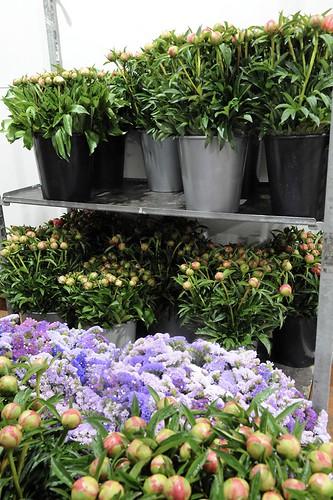26-FLEURS ET PLANTES - FERRARI FLEURS GROSSISTE AVIGNON