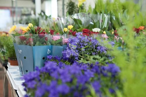 12-FLEURS ET PLANTES - FERRARI FLEURS GROSSISTE AVIGNON