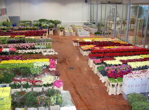 0-FLEURS-ET-PLANTES---39-FERRARI-FLEURS-GROSSISTE-AVIGNON