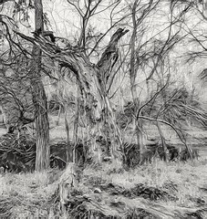 B&W trees at the river bank - abstract (elnina999) Tags: abstract art bw environment image landscape winter nature mobilephotography pixelphonephotography branches