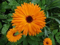 IMG_9755 (belight7) Tags: eton garden berkshire uk nature life love