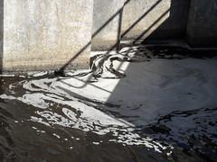 Foam corner (Nekoglyph) Tags: river tees barrage foam water dock lock concrete grey white teesside sunny shadows dark swirls