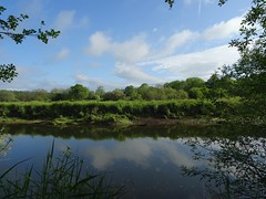Warm and tranquil (Phil Gayton) Tags: water grass reed undergrowth tree sky cloud snipe island river dart totnes devon uk reflection