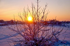 Sunset / tree & snow (CFR2100CP) Tags: sunset tree snow hibernal winter surnise sun stea apus romania ger ninsoare poteca elita 20 epic buftea bucuresti terra calea lactee milk aurora borealis polar light beautiful colors steaua alpha centauri norul lui apusul perfect andu2100hp andu mihailescu alexandru buciumeni city omat nea la capatul pamantului polul pol north austal portocaliu amurg ora albastra blue hour portocala mare rosiatiaca orizont padure forest jupiter saturn kripton argon uranus moon 060da photografer photo cod