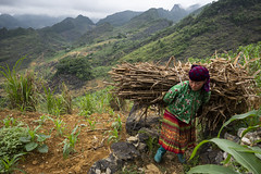Ha Giang 03 (arsamie) Tags: people ma pass culture vietnam pi van leng dong hmong vac meo hagiang woman elephant mountains field grass work countryside ancient colorful asia dress farm horizon harvest folklore hills heavy load far happyplanet asiafavorites