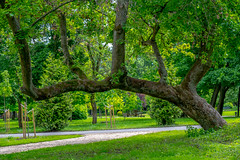 Csak egy fa - Just a tree (2019.03) (Dzsózi) Tags: fujinonxf1855mmf284rlmois fujixt2