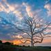 De beroemde boom van de Posbank
