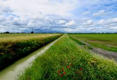 IMG_0008y (gzammarchi) Tags: italia paesaggio natura pianura campagna landscape ravenna villanovadiravenna strada sterrato canale fiore papavero nuvola