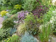 P1190497 (jrcollman) Tags: helianthemum collepardo gardens places plants euphorbia eplant gplant hplant weigela geraniumsanguineum wplant hebe