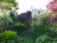 P1190500 (jrcollman) Tags: collepardo gardens places plants euphorbia eplant wisteriafloribundaalba wplant