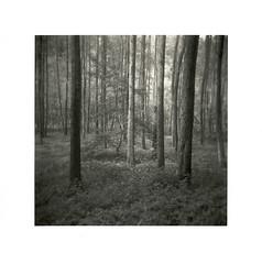 Pfälzer Wald, Felsalbe (Wolfgang Moersch) Tags: pfälzerwald kallitype mt3variotoner holga120n