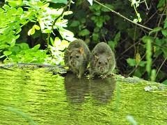 Two spirited inhabitants! (Ia Löfquist) Tags: rome rom roma italy italien italia maj may