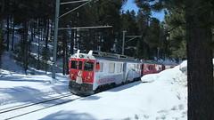 RhB Train north of Pontresina (motohakone) Tags: switzerland train rhb schweiz suisse svizzera zug schienen rail rhätischebahn snow