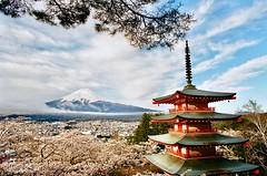 遠山含笑 ([M!chael]) Tags: nikon f3hp nikkor 10525 ais kodak proimage100 film manual japan fujiyama fujimt 富士山 山梨 浅間公園