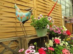 IMG_0053 cute (belight7) Tags: garden centre berkshire uk england flowers plant shop