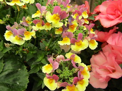 IMG_0048 (belight7) Tags: garden centre berkshire uk england flowers plant shop