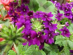IMG_0049 (belight7) Tags: garden centre berkshire uk england flowers plant shop