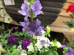IMG_0051 (belight7) Tags: garden centre berkshire uk england flowers plant shop