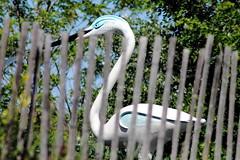 Plastic water bird (ZUHMHA) Tags: peypin france leboisdeslutins nature fence grille barrière water eau
