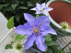 IMG_0059 (belight7) Tags: garden centre flowers uk england nature shop berkshire