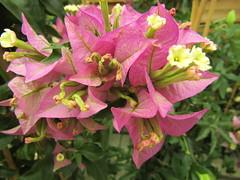 IMG_0056 (belight7) Tags: garden centre flowers uk england nature shop berkshire