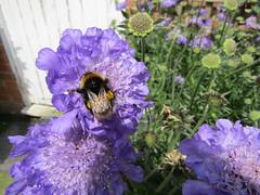 IMG_0060 (belight7) Tags: bee garden centre flowers uk england nature shop berkshire