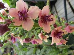 IMG_0058 (belight7) Tags: garden centre flowers uk england nature shop berkshire