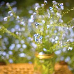 Forget me not jar (photoart33) Tags: flowers forgetmenot jar stilllife