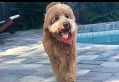 Lucy Lu's handsome Rusty!