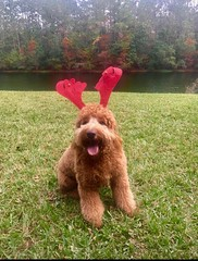 Lucy Lu's adorable Rusty!