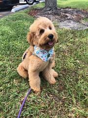 Sophie's handsome Yogi!