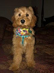 Sophie's adorable Yogi