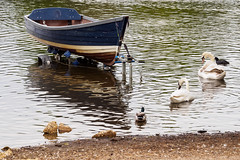 High and Dry-E5281788 (tony.rummery) Tags: beached boat ducks em10 heathpond lake mft microfourthirds omd olympus petersfield pond swans water waterbirds england unitedkingdom