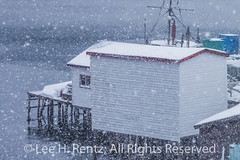 Fishing Stage in Francois Outport during a Snowstorm in Newfoundland (Lee Rentz) Tags: atlantic atlanticcanada atlanticocean february francois francoisbay newfoundland newfoundlandandlabrador southcoast adventure beautiful boats buildings canada coast coastal coastline colorful colors colours falling ferry fishingvillage fjord harbor harbour homes horizontal houses isolated landscape lights mountainous mountains northamerica outport picturesque pretty remote snow snowing snowstorm snowy stage town travel village waterfront weather winter