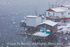 Fishing Stages in Francois Outport during a Snowstorm in Newfoundland (Lee Rentz) Tags: atlantic atlanticcanada atlanticocean february francois francoisbay newfoundland newfoundlandandlabrador southcoast adventure beautiful boats buildings canada coast coastal coastline colorful colors colours falling ferry fishingvillage fjord harbor harbour homes horizontal houses isolated landscape lights mountainous mountains northamerica outport picturesque pretty remote snow snowing snowstorm snowy stage town travel village waterfront weather winter