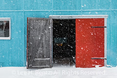 Puffin Graphic on Door in Francois Outport during a Snowstorm in Newfoundland (Lee Rentz) Tags: atlantic atlanticcanada atlanticocean february francois francoisbay newfoundland newfoundlandandlabrador southcoast adventure beautiful buildings canada coast coastal coastline colorful colors colours falling ferry fishing fishingvillage fjord graphic harbor harbour isolated landscape lights northamerica outport painting pretty puffin red remote shed snow snowing snowstorm snowy stage town travel vertical village waterfront weather winter