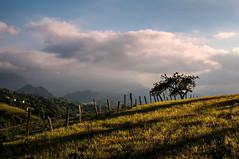 (ccc.39) Tags: asturias oviedo naturaleza rural atardecer prado árbol montes paisaje landscape sunset country