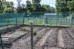 Community Garden at Peter Pan Park 5.30.19