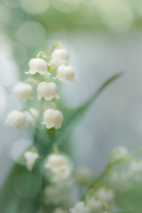 Lily of the Valley (judy dean) Tags: judydean 2019 garden lensbaby texture ps lilyofthevalley white flowers bells bokeh