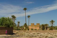RU_201904_Maroc_149_x (boleroplus) Tags: horizontal palmeraiedeskoura palmier paysage skoura maroc