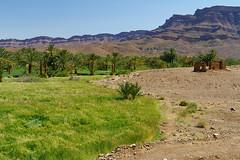 RU_201904_Maroc_387_x (boleroplus) Tags: desert horizontal montagnes palmier paysage valleedudraa zagora maroc
