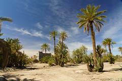 RU_201904_Maroc_144_x (boleroplus) Tags: horizontal palmeraiedeskoura palmier paysage skoura maroc