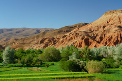 RU_201904_Maroc_198_x (boleroplus) Tags: gorgesdadés horizontal montagnes palmier paysage boumalnedades maroc